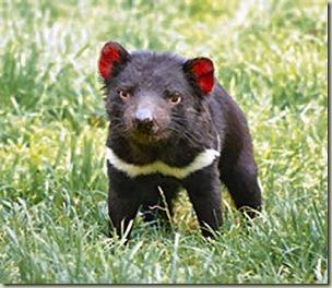 diav tasmania