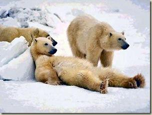 orsi_bianchi
